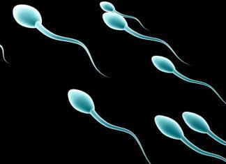 5 curiosità sugli spermatozoi