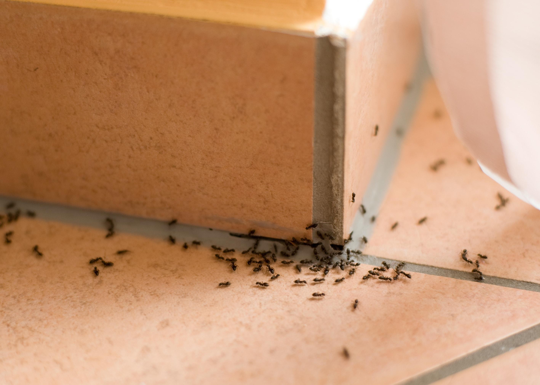 Come Eliminare Le Formiche Da Casa Trucchi E Rimedi Naturali
